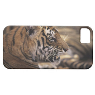 Two tigers (Panthera tigris) lying down, iPhone SE/5/5s Case