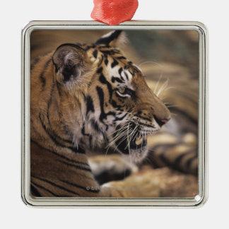 Two tigers (Panthera tigris) lying down, Metal Ornament