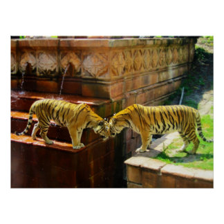 Two Tigers Print