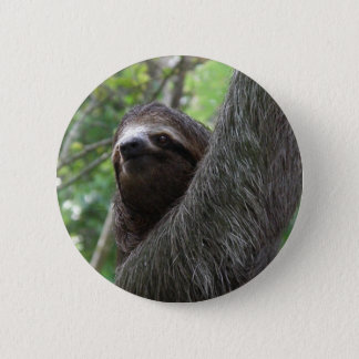 Two Toed Sloth Button