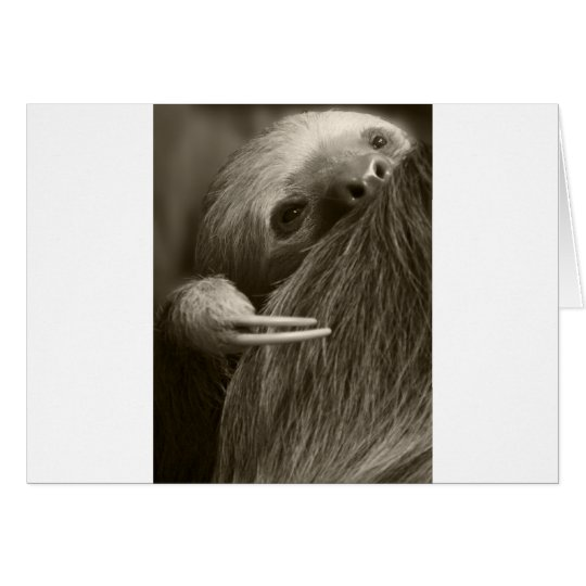 two toed sloth card