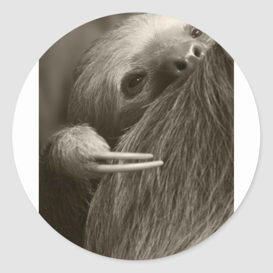two toed sloth classic round sticker