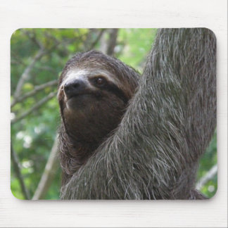 Two Toed Sloth Mouse Pad