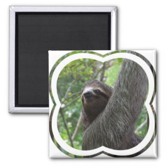 Two Toed Sloth Square Magnet