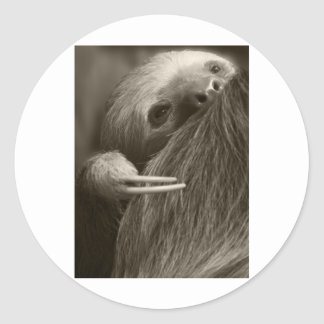 two toed sloth sticker