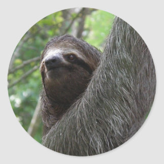 Two Toed Sloth Stickers