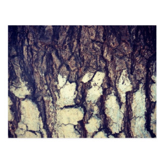 Two Tone Bark Texture Postcard