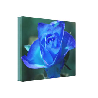 Two Tone Blue Rose Wrapped Canvas