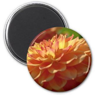 Two Tone Orange Dahlia Magnet