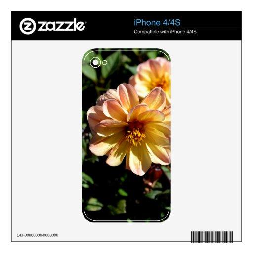 Two Tone Peach Dahlia Flower iPhone 4S Skins