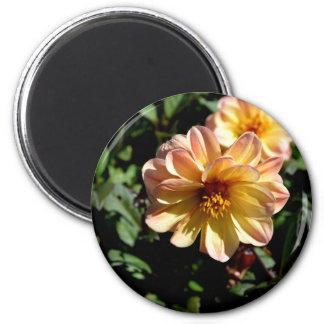 Two Tone Peach Dahlia Flower Magnet