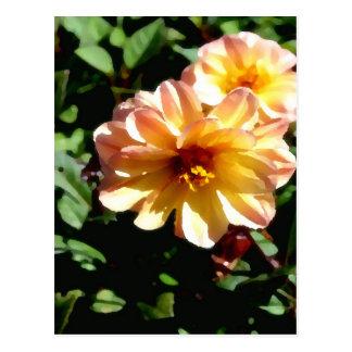 Two Tone Peach Dahlia-PhotoMagic Postcard