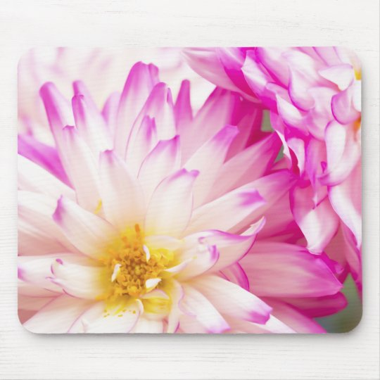 Two Tone Pink And White Dahlia Mouse Pad
