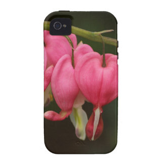 Two Toned Bleeding Hearts Vibe iPhone 4 Cover