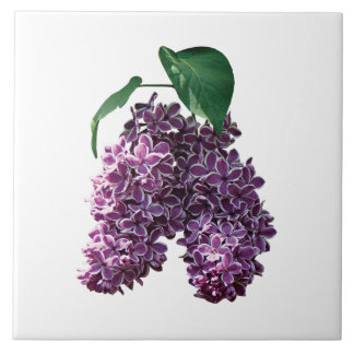 Two-Toned Lilacs Tile