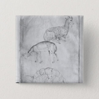 Two tortoises, goat and sheep pinback button