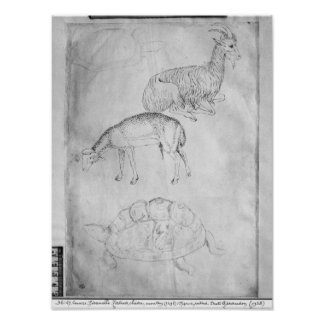 Two tortoises, goat and sheep poster