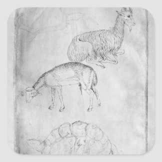 Two tortoises, goat and sheep square sticker