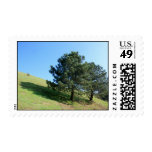 Two Tree Hill Stamp