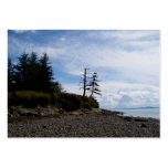 Two Tree Point Large Business Cards (Pack Of 100)