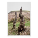 Two tree stumps posters
