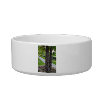 Two trees growing closely together pet water bowl