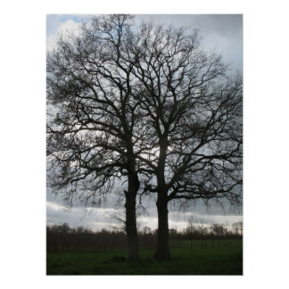 Two Trees in Nature against Clouded Sky Poster