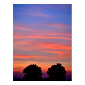 Two trees in the sunset - Postcard