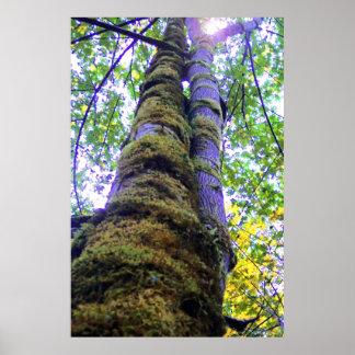 Two Trees Print