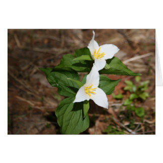 Two Trillium Stationery Note Card