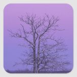 Two Trunked Tree at Sunrise; Chippewa County, Square Sticker