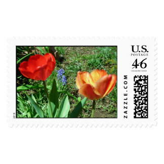 two tulips and muscari postage