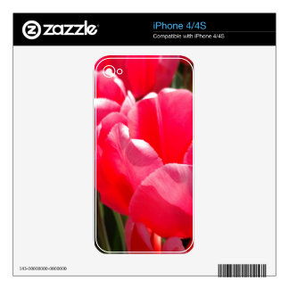 Two Tulips - Pink Coral iPhone 4 Decal