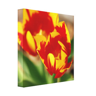 Two Tulips Wrapped Canvas