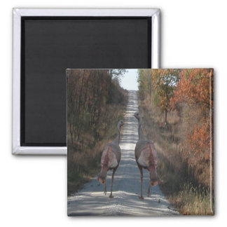 Two Turkeys 2 Inch Square Magnet