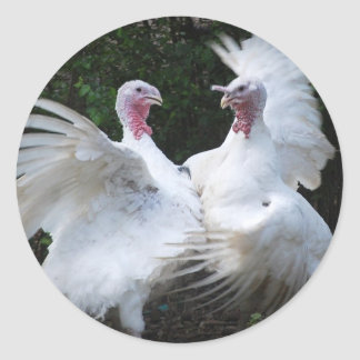 Two Turkey's Duking It Out Sticker