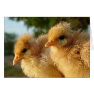 Two Turkin Chicks card