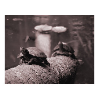 two turtles on palm trunk sepia flyers