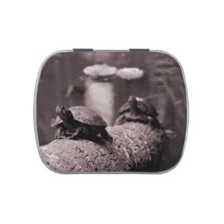 two turtles on palm trunk sepia jelly belly tins