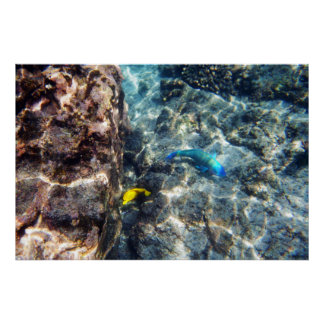 Two Underwater Fish Poster Print