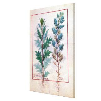 Two varieties of Artemesia Canvas Print