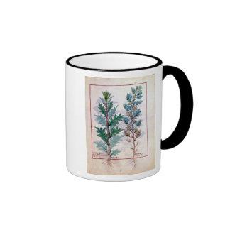 Two varieties of Artemesia Coffee Mugs