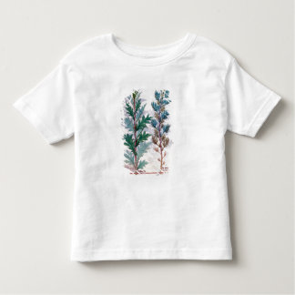 Two varieties of Artemesia Toddler T-shirt