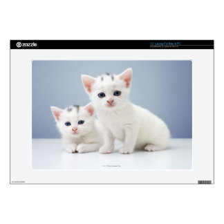 """Two very young white kittens stare inquisitively 15"""" laptop decal"""