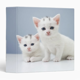 Two very young white kittens stare inquisitively binder