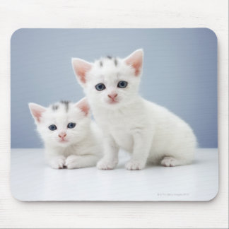 Two very young white kittens stare inquisitively mouse pad