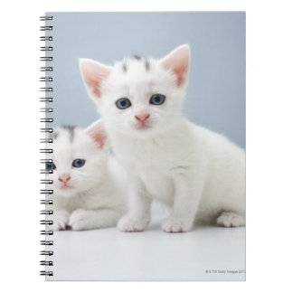 Two very young white kittens stare inquisitively note books