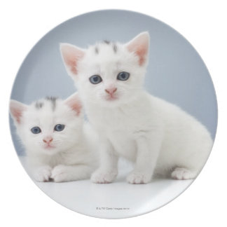 Two very young white kittens stare inquisitively plate