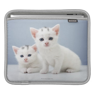 Two very young white kittens stare inquisitively sleeve for iPads