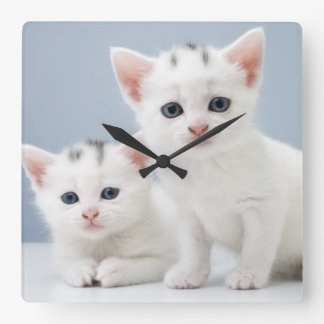 Two very young white kittens stare inquisitively square wall clock